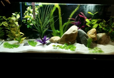 75galneonscoriesglass cats blue gourami dojo loach rainbow shark bristlenose