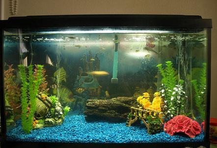 29 gallon fish tanks page 14 for 29 gallon fish tank dimensions