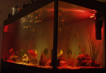 our 5ft fish tank at night