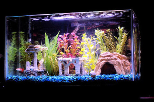 Wazzuelf 39 s freshwater tanks details and photos photo for First fish tank