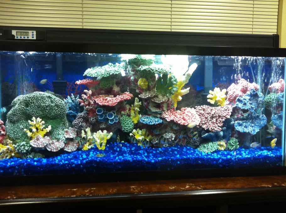 Michael1 39 s freshwater tanks photo id 39288 full for Black fish tank gravel