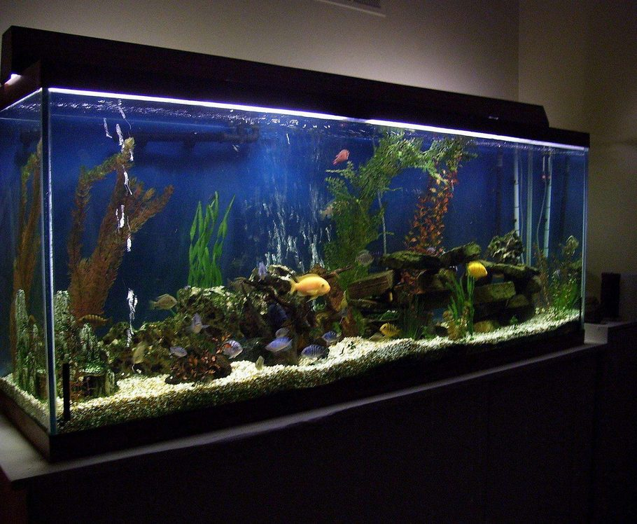 Mikethecardsfan 39 s freshwater tanks photo id 12364 full for 150 gallon fish tank