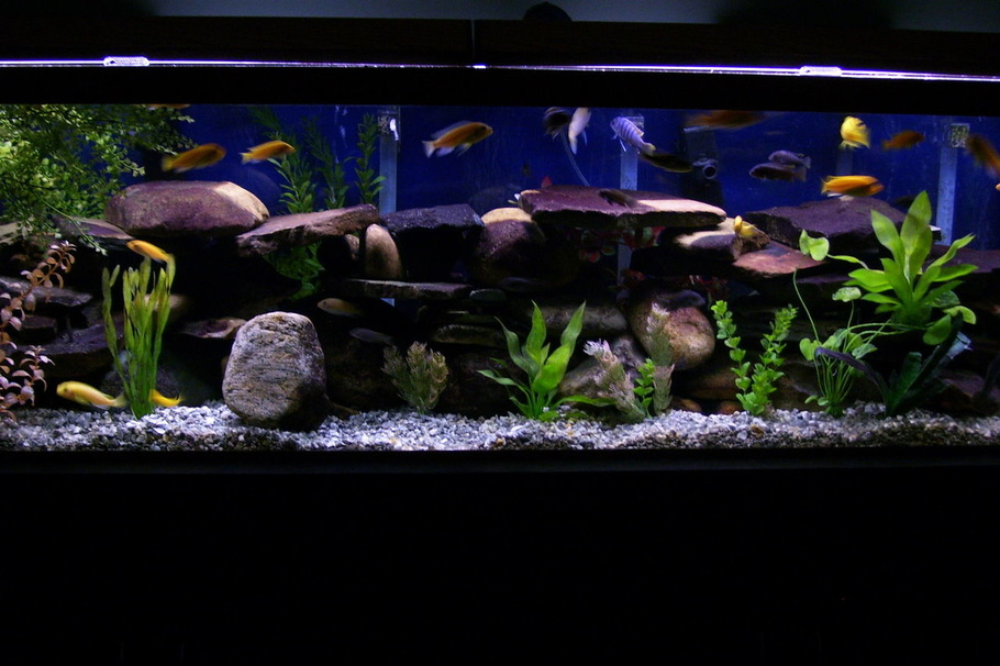 Mowenfast 39 s freshwater tanks photo id 16686 full for What kind of fish does long john silver s use