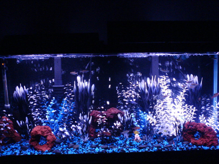 Ziggy S Freshwater Tanks Photo Id 15483 Full Version