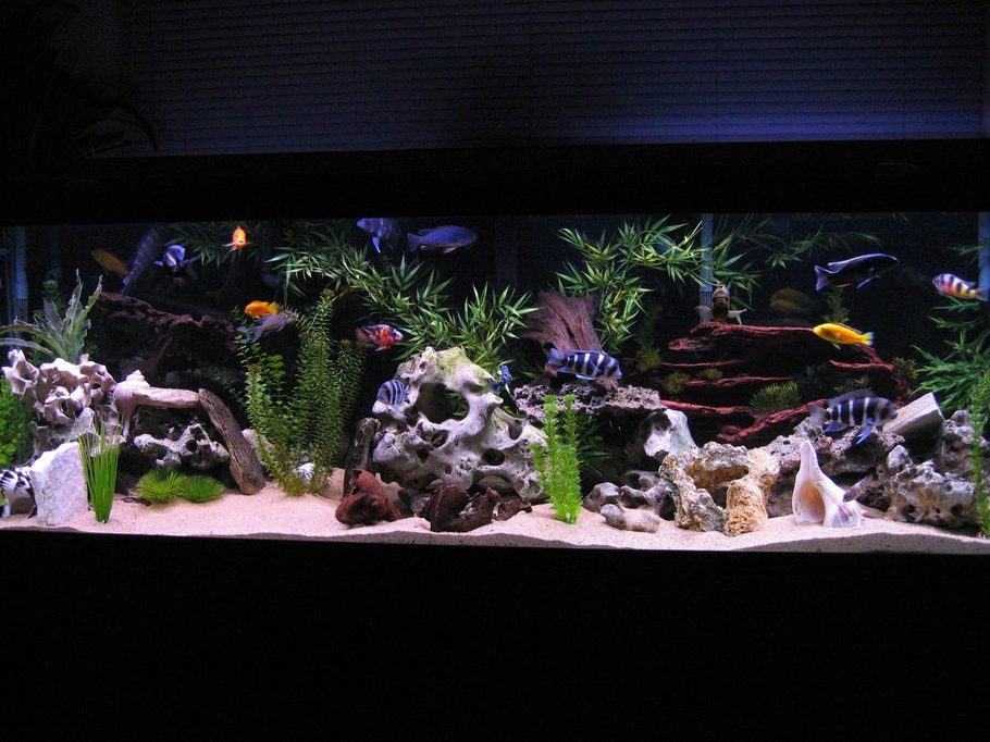 Most beautiful freshwater tanks all time for 55 gallon aquarium decoration ideas