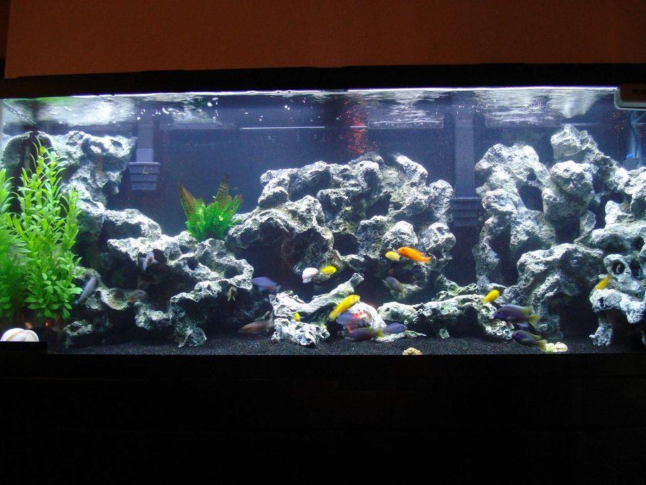 Converting a Freshwater Aquarium to Saltwater  Algone