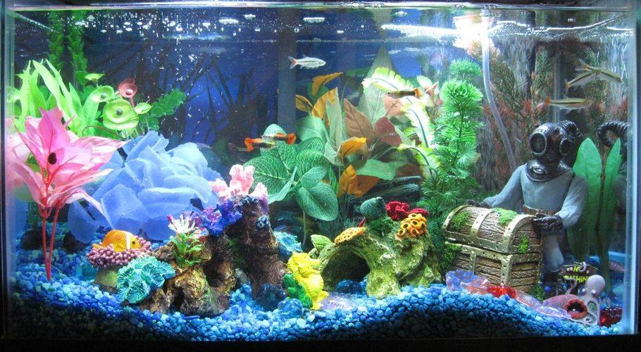 Happydad S Freshwater Tanks Photo Id 21504 Full Version Ratemyfishtank Com