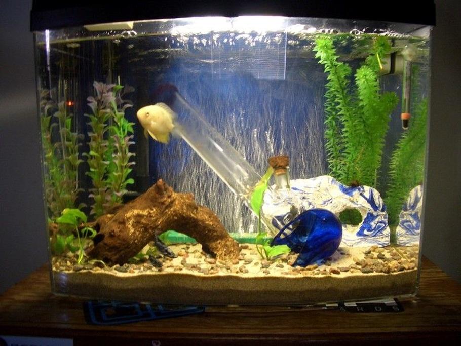 Jamescasale S Freshwater Tanks Photo Id 16033 Full