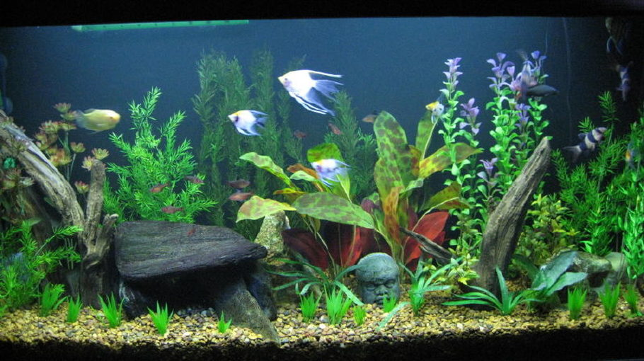 Seve's Freshwater Tanks Details and Photos - Photo 26064 ...