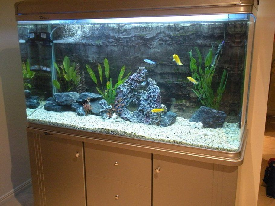 ausfishy 39 s freshwater tanks details and photos photo. Black Bedroom Furniture Sets. Home Design Ideas