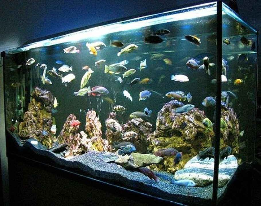 Zelva S Freshwater Tanks Details And Photos Photo 35509