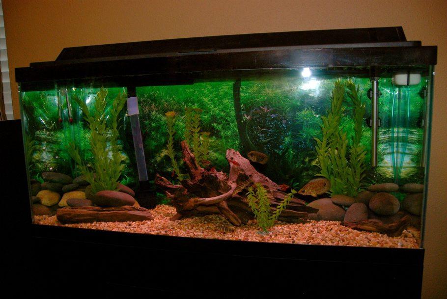 Thatfishtankman S Freshwater Tanks Photo Id 36239 Full