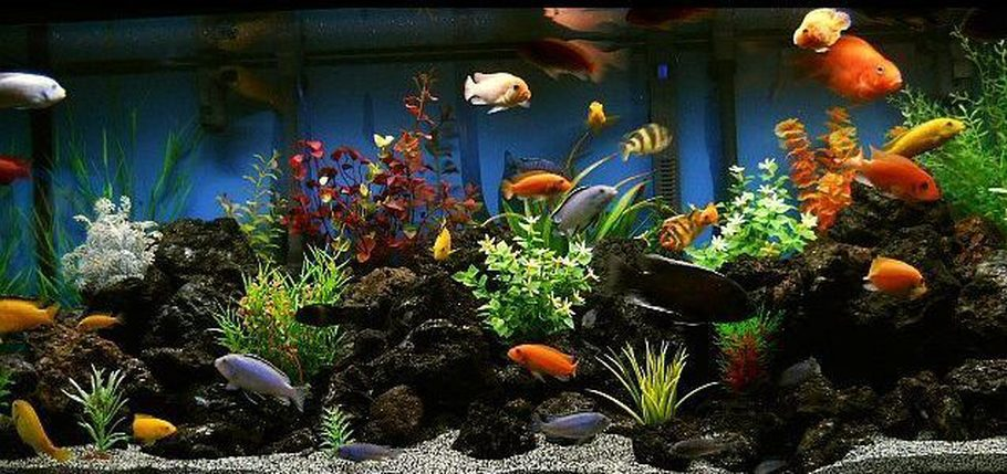 Most beautiful freshwater tanks 2012 for How much does a 20 gallon fish tank weigh