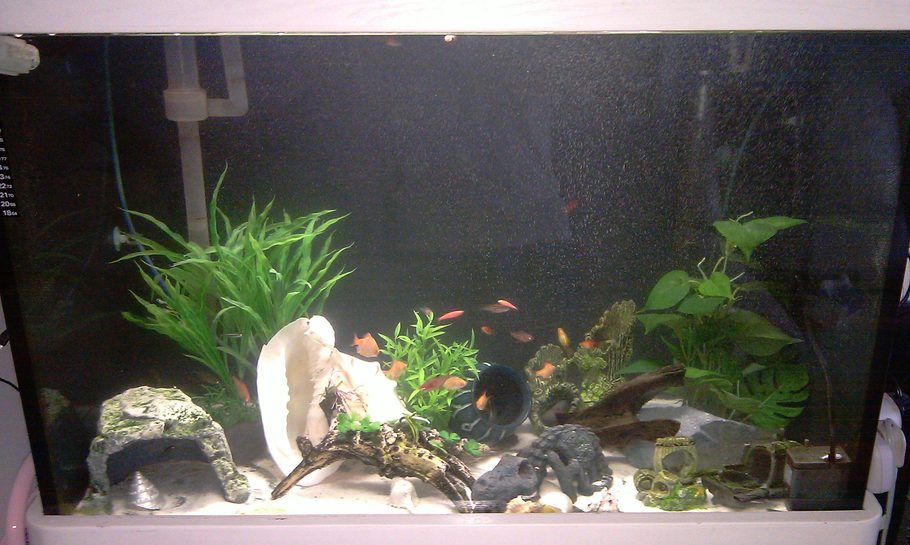 My tank is about 80 gallon, mainly I have are barbs (albino/regular strips), I dont know the name of the rest but I\'ll update this soon.
