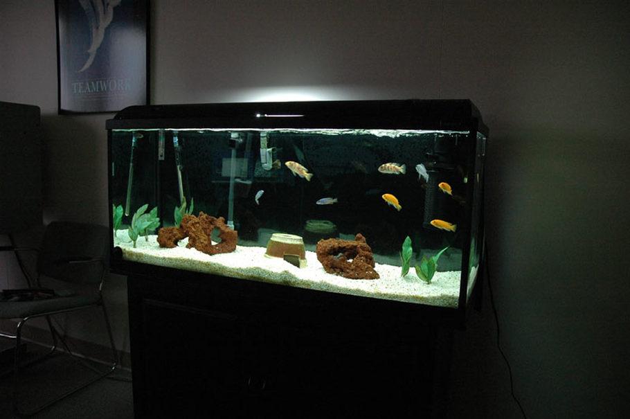 Rajnovich S Freshwater Tanks Photo Id 4391 Full
