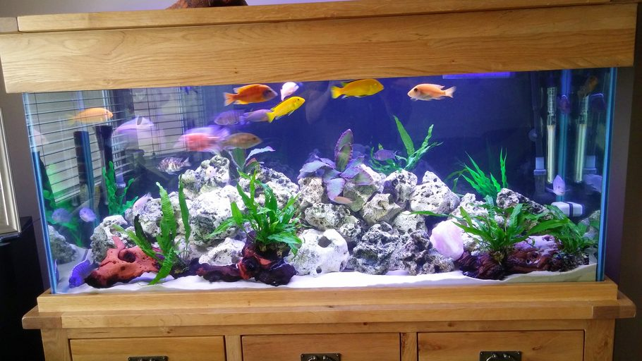 Most Beautiful Freshwater Tanks 2015 Ratemyfishtank Com