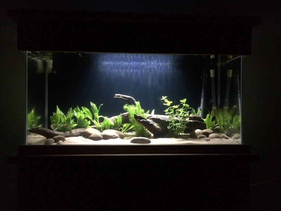 Most Beautiful Freshwater Tanks ( All Time ) | Ratemyfishtank.Com