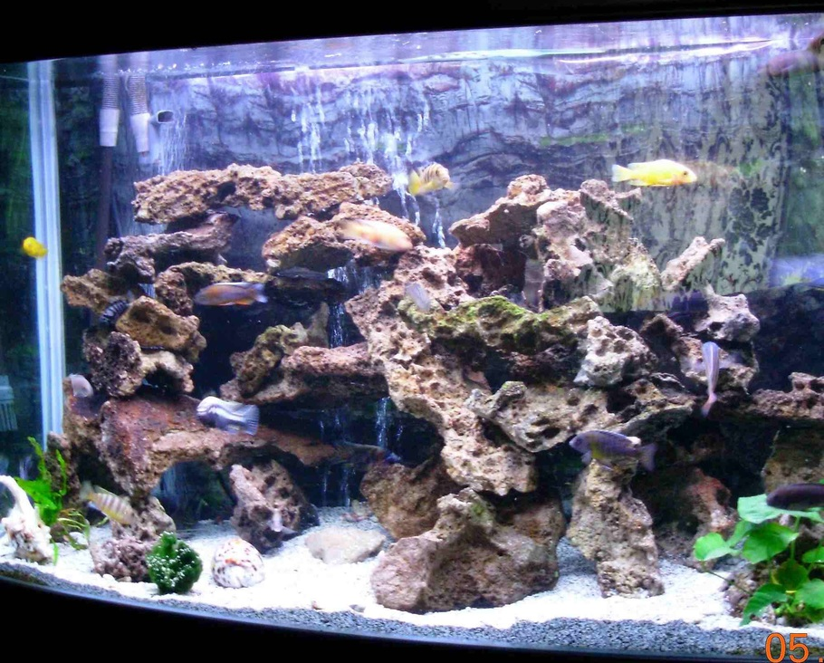 Jesterspub 39 s freshwater tanks photo id 10535 full for African cichlid tank decoration