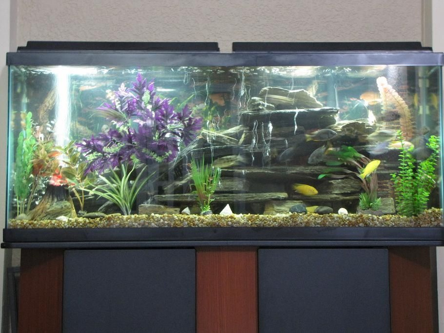 Cocotyper 39 s freshwater tanks photo id 28879 full for African cichlid rock decoration