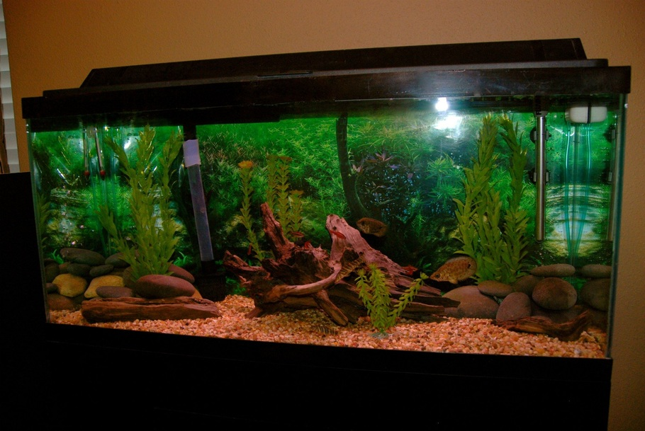 Freshwater fish tank maintenance 30 gallon 2017 fish Thirty gallon fish tank