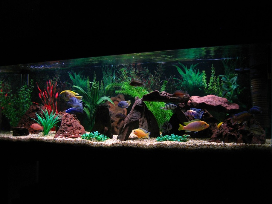 Wilko 39 s freshwater tanks photo id 23791 full version for African cichlid tank decoration