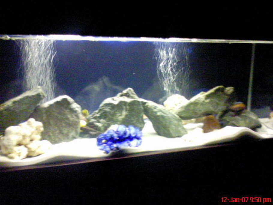 Ronandcarlz 39 s freshwater tanks photo id 7196 full for Fish tank sand