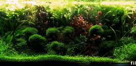 130GAL planted tank