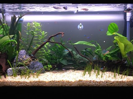 New tank 1 month old