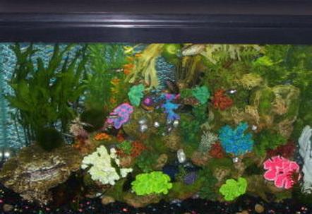 29 gallon fish tanks page 28 for 29 gallon fish tank dimensions