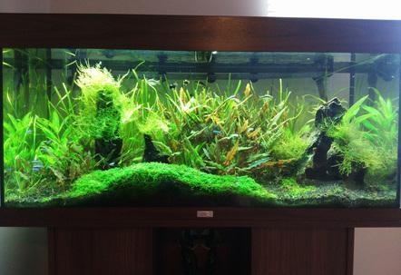 My Rio 180 planted tank