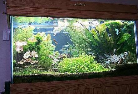 29 gallon fish tanks page 30 for 29 gallon fish tank dimensions