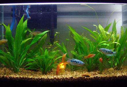 20 gallon fish tanks page 30 for 29 gallon fish tank dimensions