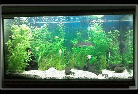 Tropical planted freshwater