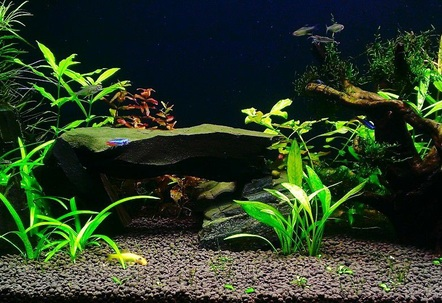 plant tank with rock and wood