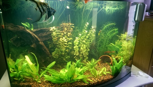 How to fix cloudy tank water for Cloudy water in fish tank solutions