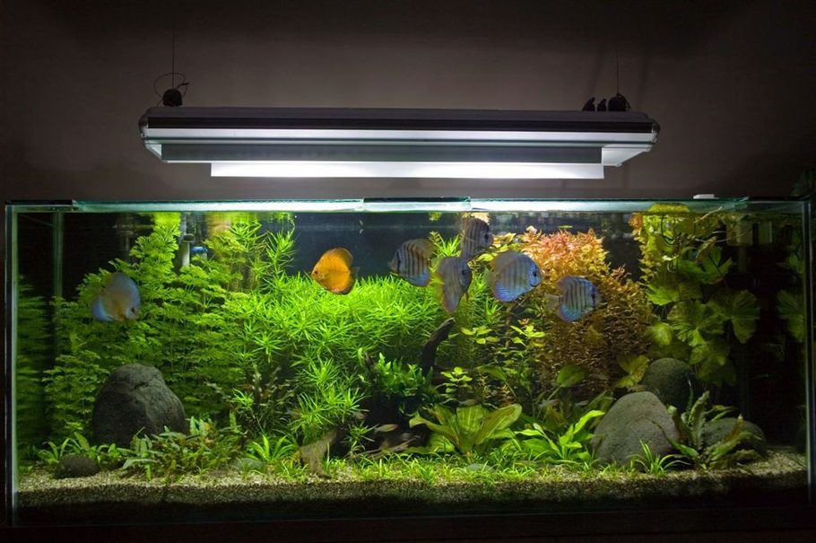 Aquaticcreations S Planted Tanks Photo Id 21946 Full