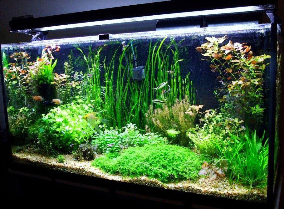 most beautiful planted tanks 2008. Black Bedroom Furniture Sets. Home Design Ideas