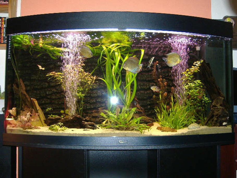 Discus fish breeding tank setup
