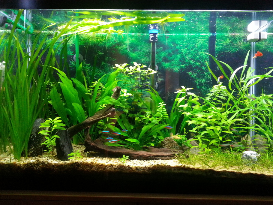 Using driftwood and live plants in the freshwater tank for Aquarium plant decoration