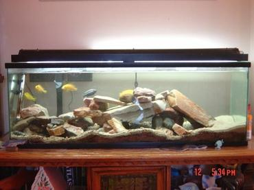 Using Carbon in a Freshwater Aquarium