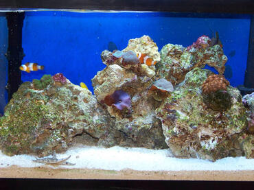 What is an Aquarium Sump?