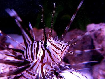 What's That? The Top 10 Strangest Looking Saltwater Fish