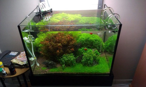 Common problems with tank filters for Fish tank filter not working