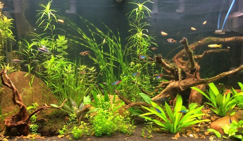 If your plants are turning yellow another possibility is that the plants in your tank are not receiving enough nutrients to facilitate healthy growth. & Diagnosing Problems with Aquarium Plants | RateMyFishTank.com azcodes.com