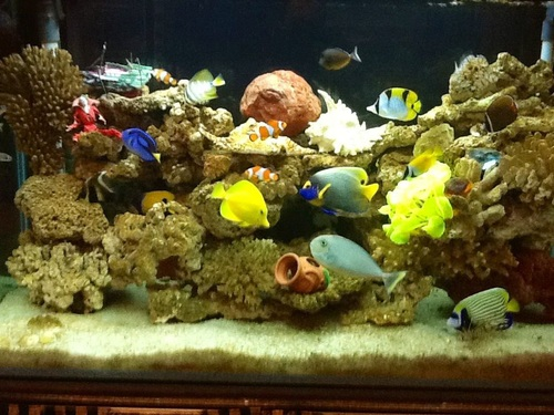 Types of saltwater tanks fish only fowlr and reef tanks for Fish only saltwater tank