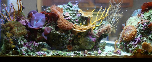 Finally, Weu0027ll Leave You With Tips On Decorating Your Tank And A List Of  Online Sources For You. What Are Aquarium Decorations?