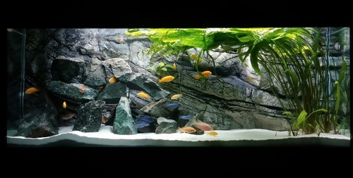 Fish tank maintenance and cleaning for How often do you clean a fish tank