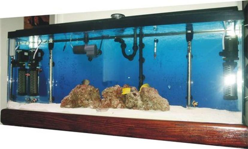 How to keep your saltwater aquarium from overheating for Fish tank filter not working