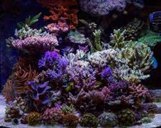 Using a JBJ Nano Cube 28 Gallon HQI Reef Series Aquarium for Your Nano Reef