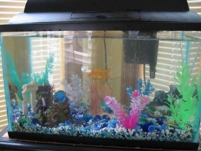 Moving — How to Prepare Your Tank for a Move